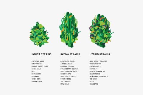 weed-cannabis-marijuana-strains